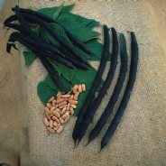 Climbing French bean Cosse Violette - 90 seeds